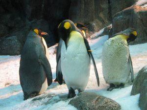 A keresőoptimalizálásnak alkalmazkodni kellett a Pingvin algoritmushoz